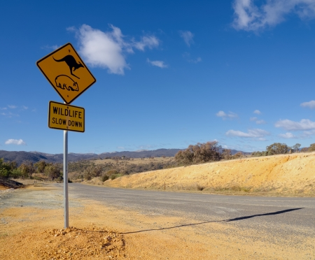 wombat and kangaroo warning sign on a road in Australian outback photo