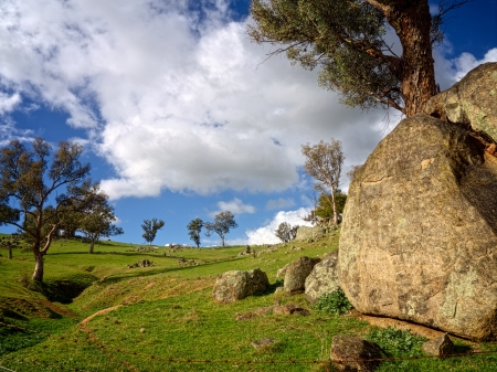 big old rock next to a gum tree on a green hill in Australia Stock Photo - 20872218