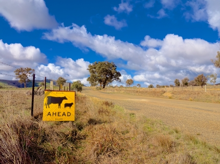cattle and sheep warning sign on a rural road in Australia