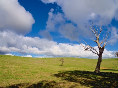 lonely dead tree in a nice green paddock Stock Photo - 20872223