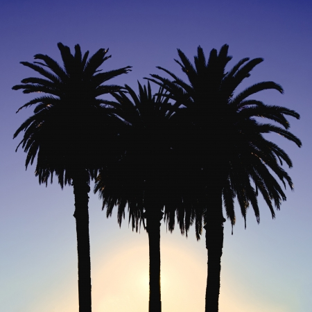 three palm trees: three palm trees silhouetted against a blue and purple sunset Stock Photo