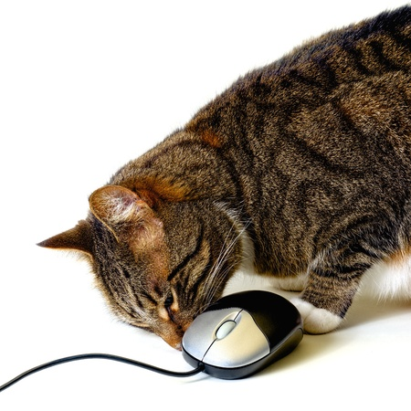 tabby cat sniffing a computer mouse to see if its real photo