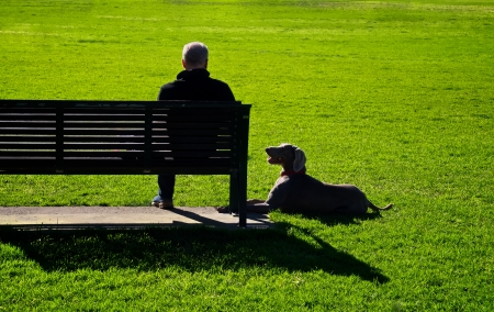 man sitting on a park bench with his weimaraner laying on the grass watching him