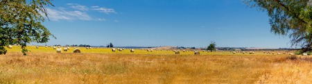 hay bales on an australian farm in victoria photo