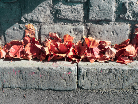 autumn leaves in a bluestone gutter Stock Photo