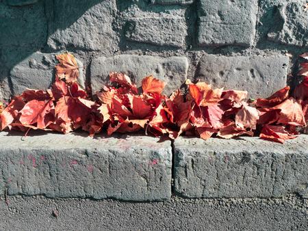 autumn leaves in a bluestone gutter Stock Photo