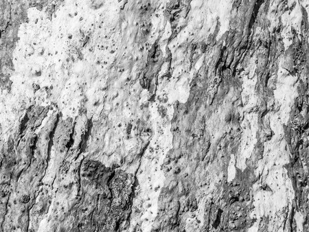 Close up detail of textured bark of an Australian gum tree in Victoria