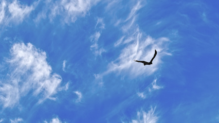 Large eagle in silhouette against a bright blue sky with wisps of cloud in Australia