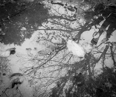 leaves sitting in a puddle with trees reflected in the water on a cold melbourne day