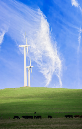 Electricity generating wind farm in Victoria Australia with cattle grazing in the foreground Stock Photo