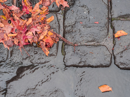 autumn leaves on a wet bluestone road curb Stock Photo
