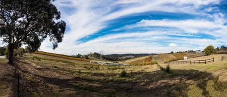 A small local vineyard in victoria, australia during autumn