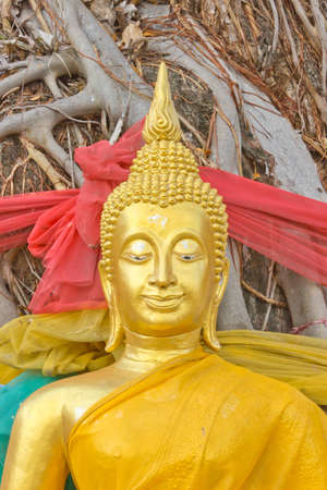 Buddha under banyan tree
