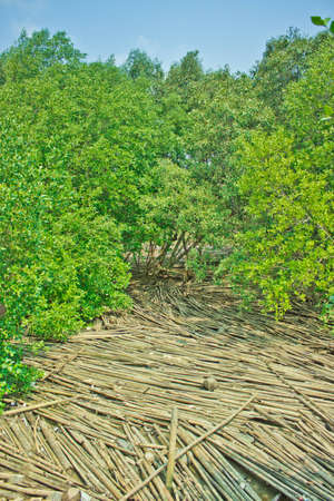 Beach filled with waste of bamboos