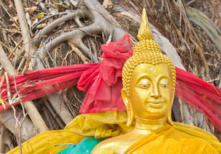 Clouse up of Golden Lord Buddha under banyan tree