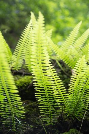 Bright Fern Plant Leaf