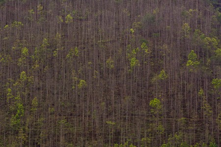 Abstract View of Forest