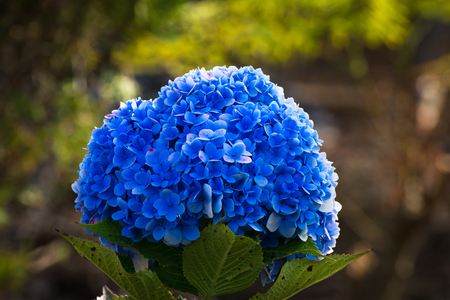 Beautiful soft Unique color Ink Blue flower Фото со стока - 115402168