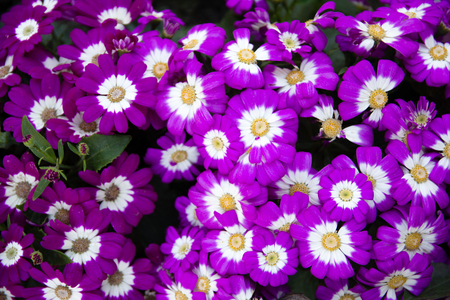 Background flowerbed pink purple flower 版權商用圖片