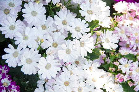Garden white flower Stok Fotoğraf
