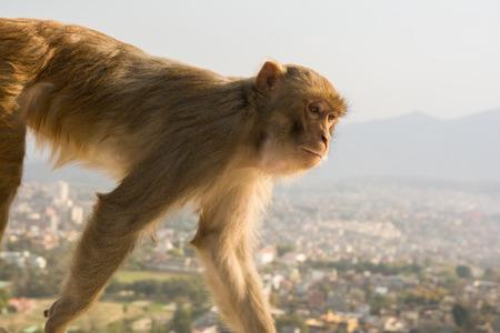 isolated monkey portrait