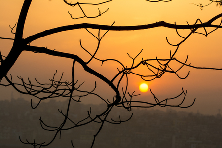 Beautiful view of sunrise behind abstract tree branch