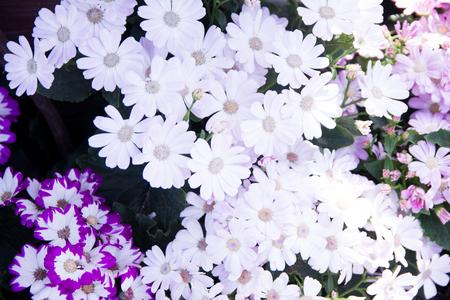 Garden white flower Stockfoto