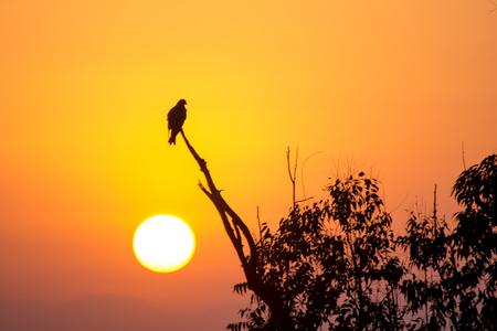 Die Silhouette eines Adlers, der auf einem Ast sitzt