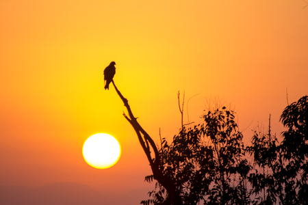 The silhouette of an eagle perched on a tree branch