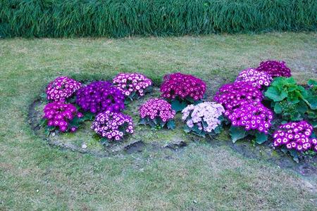 Garden pink purple flowers Stockfoto