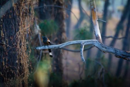 Long tail bird on a tree branch