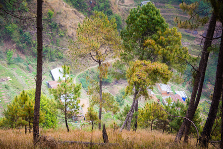 Hills, trees, pine forest and himalayas in remote area of Nepal Stockfoto