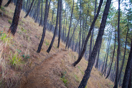 Trekking path in middle of forest tree Stockfoto