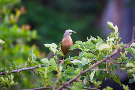 Forest bird Stockfoto