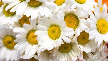 white yellow flower Stockfoto