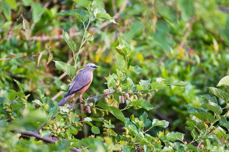 Forest bird Reklamní fotografie