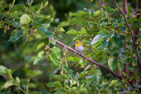Tiny bird on tree Stockfoto