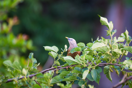 Tree bird Reklamní fotografie