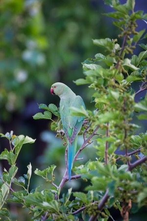 Green parrot on tree branch