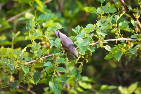 Bird Stockfoto