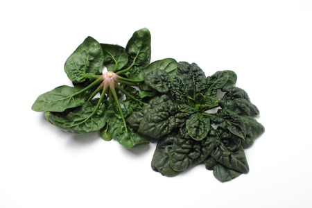 Spinach, (the Shrinking type)