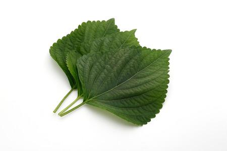 perilla leaf, egoma