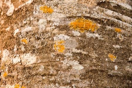 viewport: Background bark. Stock Photo