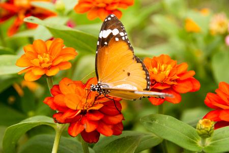 Butteryfly Stock Photo