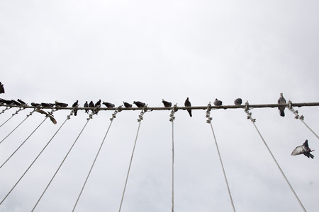 telephone pole: pigeon