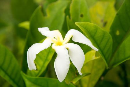stigma: white  flowers Stock Photo