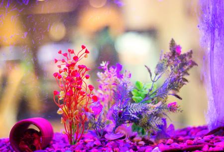 Landscaping aquarium