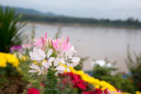 landscape flowers: landscape  flowers