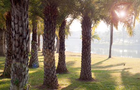 Palm trees in the garden Stock Photo