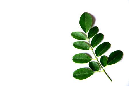 leafs  on  white  background